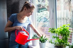 妇女浇灌的花在家 库存图片