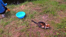 妇女渔在池塘和可爱的猫吃从桶的被窃取的鱼 免版税库存照片