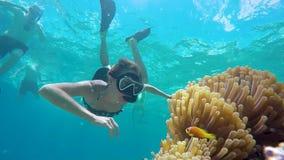 妇女潜航的undewater,在银莲花属的探索的nemo小丑鱼 股票视频