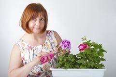 妇女照料室内植物(天竺葵) 库存图片