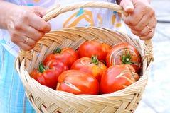 妇女用在篮子的大蕃茄 免版税库存图片