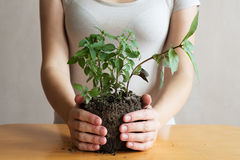 妇女用蓬蒿新芽在她的手上 免版税图库摄影