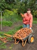 妇女用被收获的红萝卜 免版税库存照片