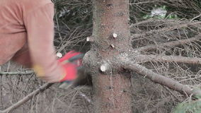 妇女由引形钢锯削减了一个树枝 影视素材