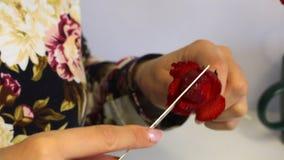 妇女由草莓做一朵玫瑰 草莓在棍子穿戴,妇女切开有刀子的瓣 附近r 股票录像