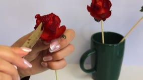 妇女由草莓做一朵玫瑰 草莓在棍子穿戴,妇女切开有刀子的瓣 附近r 股票视频