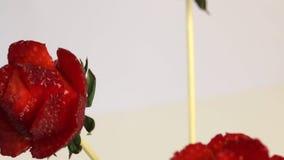 妇女由草莓做一朵玫瑰 草莓在棍子穿戴,妇女切开有刀子的瓣 股票视频