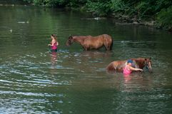 妇女画象有棕色马的在热波期间的河 免版税库存照片