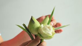 妇女的手折叠的莲花 股票视频