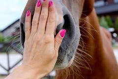 妇女的手接触了马 免版税库存图片