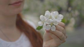妇女的手接触在树的一朵花 影视素材