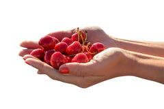 妇女的手用在白色背景的一个甜樱桃 免版税库存图片