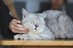 妇女的手被抚摸的愉快的小猫喜欢,对动物的爱 免版税库存图片