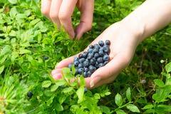 妇女的现有量用蓝莓 免版税库存图片