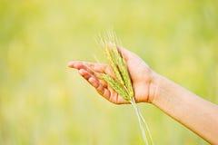 妇女的现有量用麦子绿色草本 库存照片