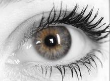 妇女的美丽的眼睛 免版税库存照片