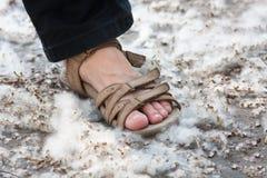 妇女的脚路的有白杨树绒毛的 库存照片