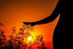 妇女的身体剪影日落的 库存图片