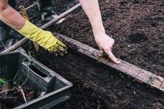 妇女种植地面的一棵植物 在地面的绿色新芽 种植幼木自温室 在a的花匠的手 免版税库存图片