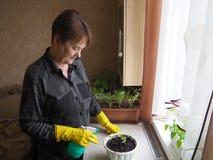 妇女移植盆的植物 免版税库存图片