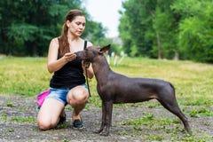 妇女给一个命令她的墨西哥无毛的狗 狗训练 免版税库存图片