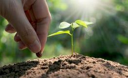 妇女耕种的手与年幼植物和种子的在morni 免版税图库摄影