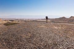妇女背包徒步旅行者走的沙漠 免版税图库摄影
