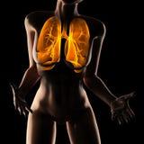 妇女胸口造影扫描 免版税库存图片