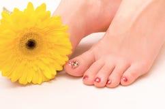 妇女脚和大丁草花 免版税库存照片
