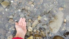 妇女腿第一人景色在黄色起动的在有小卵石海岸妇女的山河附近投入她的手对 影视素材