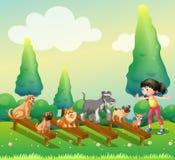 妇女训练狗在公园 免版税库存图片