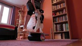 妇女设法保持在委员会的平衡有猫的 在平衡板的腿 影视素材