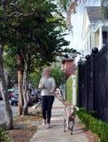 妇女走的小狗 库存照片
