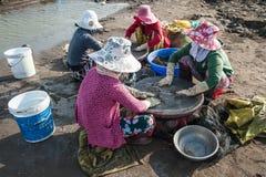 妇女过滤蛤蜊鸡蛋 免版税库存照片