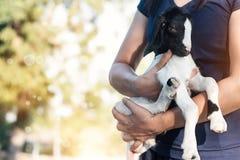 妇女运载并且拥抱在自然背景的小的山羊 免版税库存照片