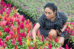 妇女选择在从事园艺的花 免版税库存图片