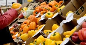 妇女选择在架子安置的甜椒在常规市场 影视素材