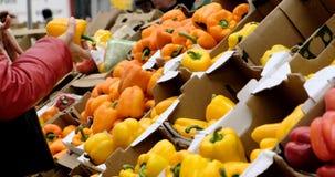 妇女选择在架子安置的甜椒在常规市场 股票录像