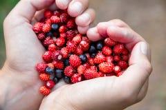 妇女递拿着在心脏形状的极少数成熟新鲜的森林莓果 蓝莓和野草莓在人的棕榈 图库摄影