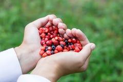 妇女递拿着在心脏形状的极少数成熟新鲜的森林莓果 蓝莓和野草莓在人的棕榈 库存照片