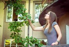 妇女采摘桑树 免版税库存照片