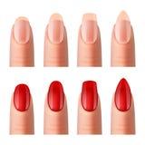 妇女钉子修指甲现实映象集 向量例证