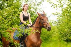 妇女骑师训练骑乘马 体育活动 库存图片