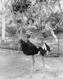 妇女骑马驼鸟(所有人被描述不更长生存,并且庄园不存在 供应商保单将没有 免版税库存照片