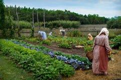 妇女从事园艺 免版税库存图片