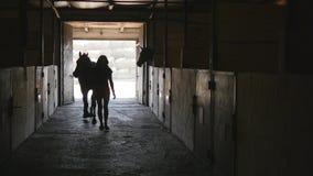 妇女主导的马槽枥 无法认出的女性骑师走与马在槽枥 正面图 股票视频
