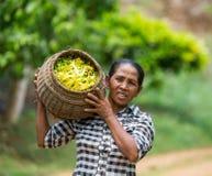 妇女负担与香水的一个篮子 免版税库存图片