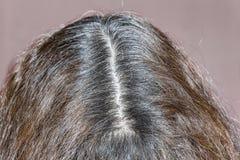 妇女` s灰色头发根 年龄变动 去的灰色 免版税库存照片