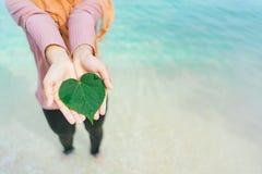 妇女` s递举行绿色叶子心脏形状  库存图片