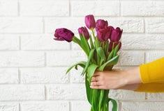 妇女` s递拿着在砖墙背景的郁金香 库存图片